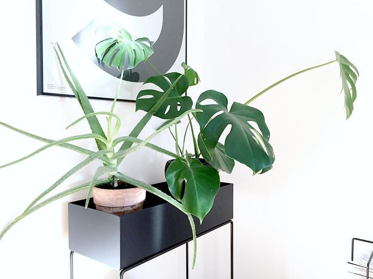 ferm living plant box plantenbak wortelwoods. Black Bedroom Furniture Sets. Home Design Ideas